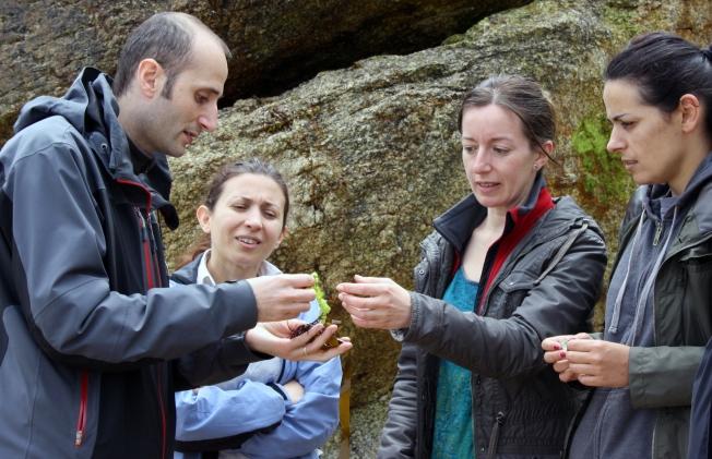 O biólogo César López amosa algunhas das especies de algas da beiramar coruñesa